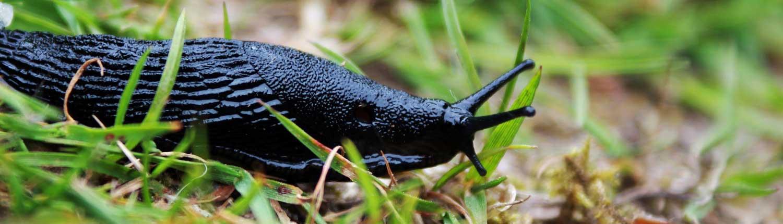 slug advice - Slug Advice