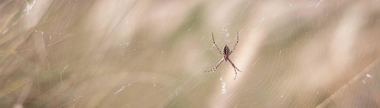 spider advice - Spider Advice