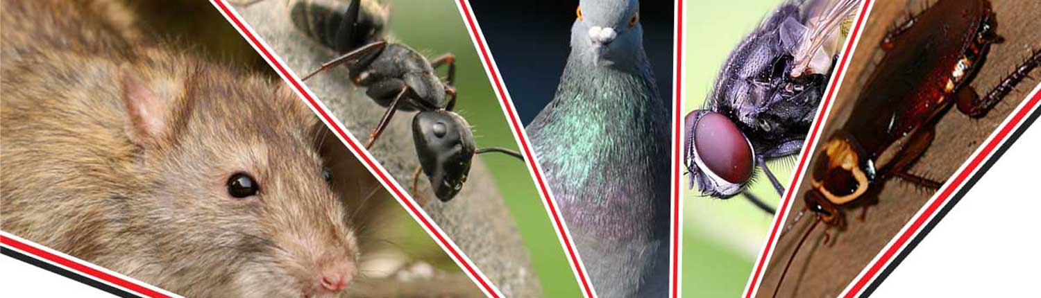 Suddenstrike Pest Control Cheshire | Domestic, Commercial, Agricultural | Different pests
