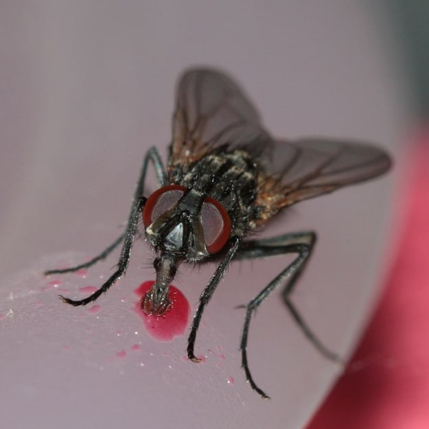 Suddenstrike Pest Control Cheshire | Domestic, Commercial, Agricultural | Flies